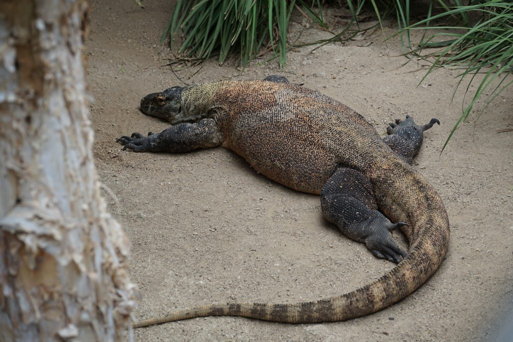 what is in sydney zoo