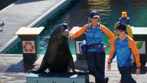 seal show sea world