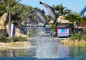 dolphins at sea world